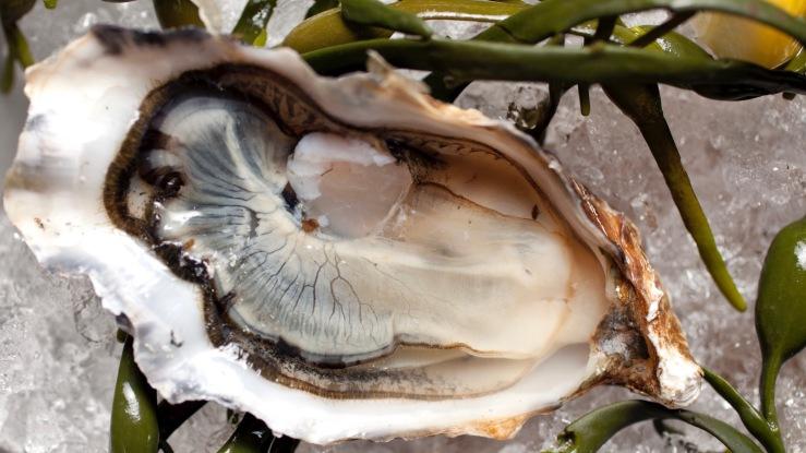 Close up of kumamoto oyster